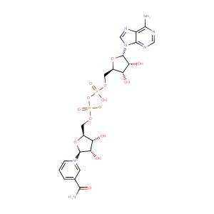 nicotinamide adenine dinucleotide,CAS No. 53-84-9.